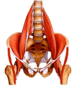 Unlock Your Hip Flexors Review